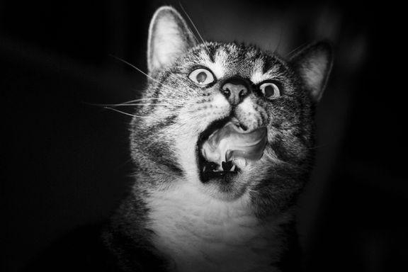 Nerdete og sjarmerende kattebøker er blitt en trend