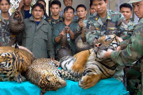 Bare 3890 ville tigre igjen. En ny kinesisk lov kan gi dem den endelige dødsdommen.