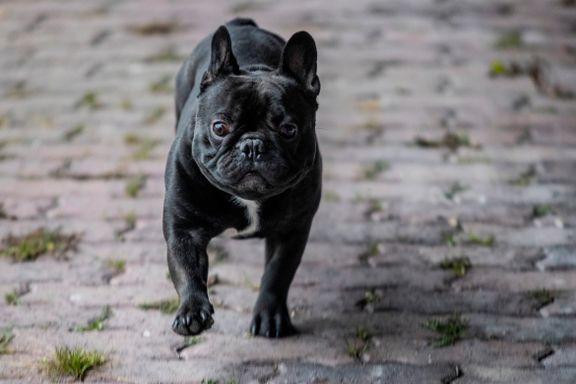 Dyrebeskyttelsen vil saksøke Norsk Kennelklub