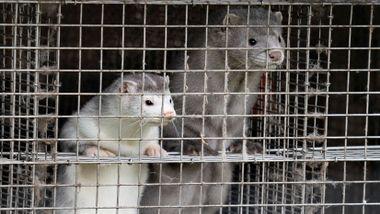 Guldvog: - Bekymringsfullt at mennesker og andre dyr kan samhandle rundt dette viruset