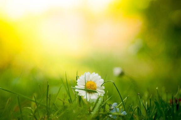 To dikt om kjærlighet, sol og om å elske   Ingrid Kristine Storesletten