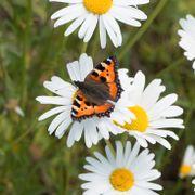 Med disse plantene får du pollinerende insekter til å trives. Og derfor er det viktig at du prøver.