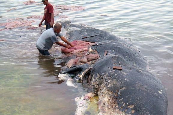 Død hval hadde 115 plastkopper, 25 plastposer og to flipflops i magen