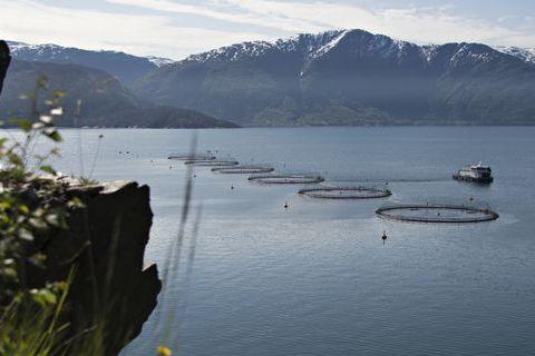 Forskere vil fjerne 60 oppdrettsanlegg på Vestlandet