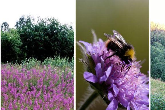 Disse trendene er dårlig nytt for pollinerende insekter