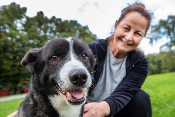 Nye bakterieprøver gir ikke svar på hvorfor unormalt mange hunder dør.