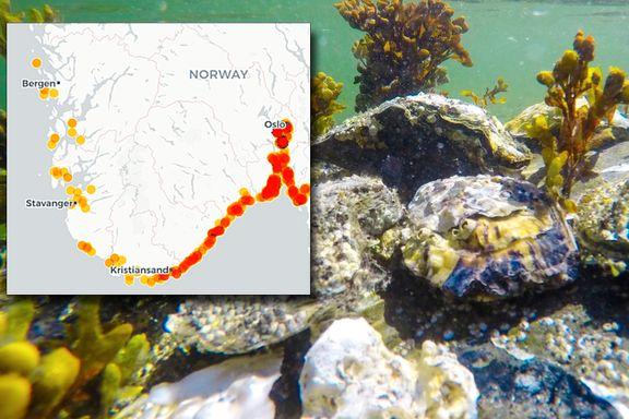 Denne uønskede gjesten ødelegger strendene langs norskekysten. Men nå ser gründere nye muligheter.