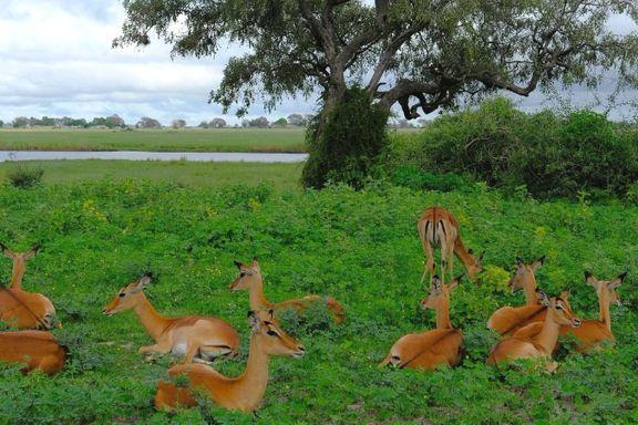 Botswana er nesten like stort som Frankrike, men har færre innbyggere enn Norge. Det gir mye plass til å utforske et av verdens rikeste dyreliv.