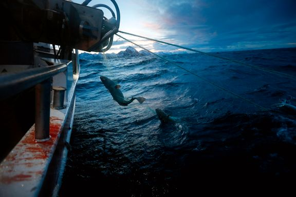 Med verdens største kaldtvannskorallrev og torskebestand, er havområdet utenfor Lofoten helt unikt | Einar André Friis-Olsen