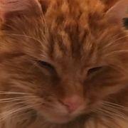Katten Gullars ble fanget i en sekk, mishandlet og druknet