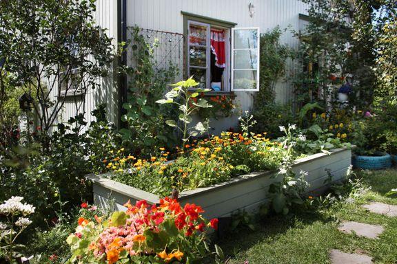 Den ville, frodige hagen har knapt kostet én krone.
