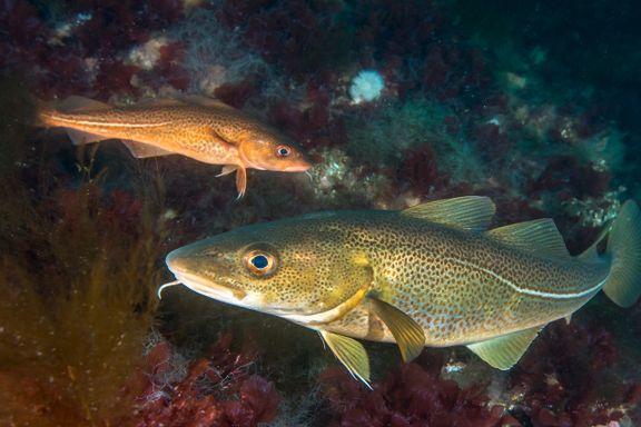 Oslofjorden er nesten tom for fisk: – Fjorden trenger hjelp