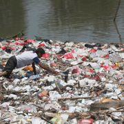 Dyrearter i Asia-Stillehavet står overfor en rekke trusler