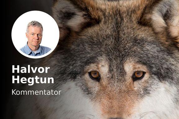 Ulven skal kjeppjages fra politikken