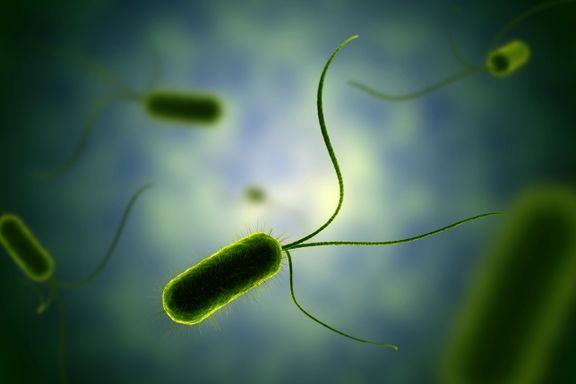 Denne bakterien har en motor seks ganger så rask som en Formel 1-bil. Kan vi kopiere den?