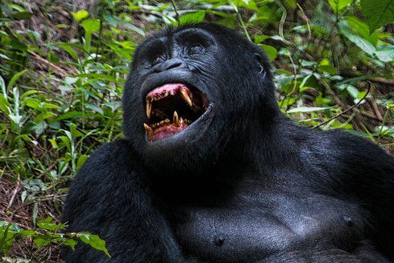 Uansett hvor forberedt du er, mister du pusten et lite øyeblikk i møte med de mektige dyrene