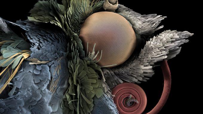 Slik har insektene og blomstene skapt helt unike avhengighetsforhold