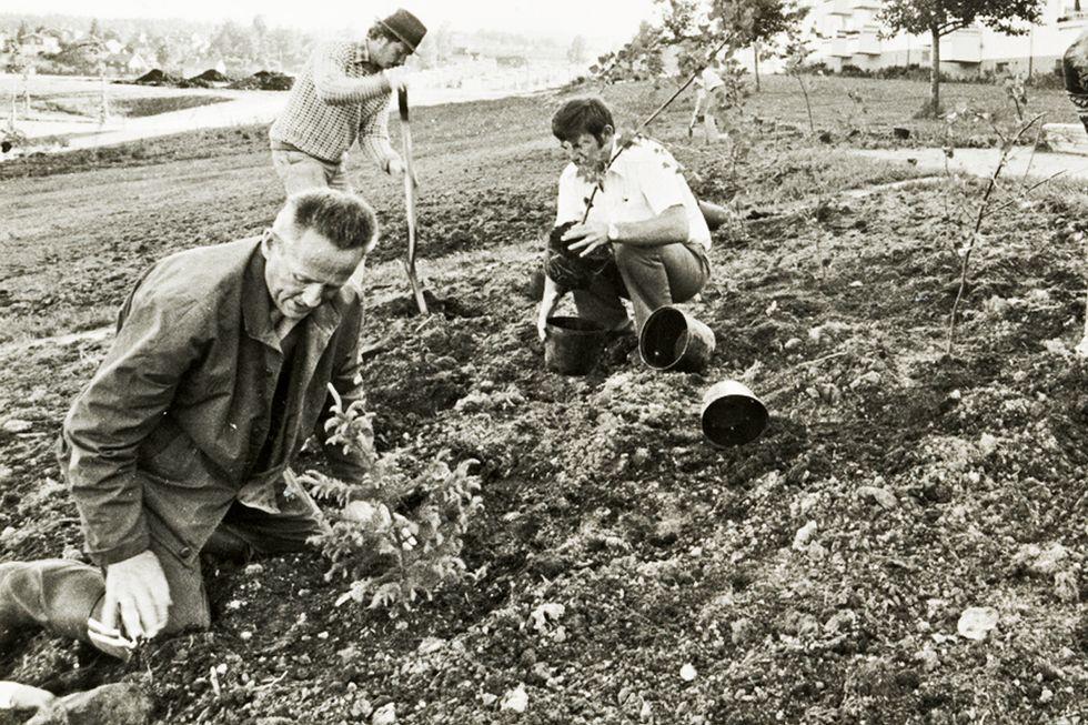 Oslo før:  Dugnadene la grunnlag for godt naboskap i de nye drabantbyene