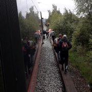 Bever stoppet tog - 15 passasjerer evakuert