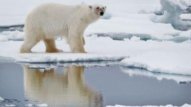 Dramatiske forskningsfunn: Nordpolen smelter uansett hva vi gjør med utslippene