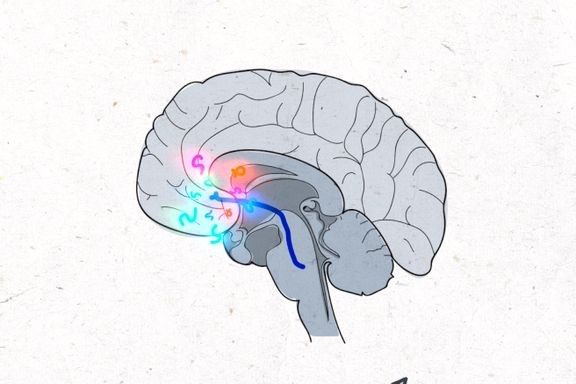 Sex, dop og opera: Dette skjer i hjernen når musikken griper deg