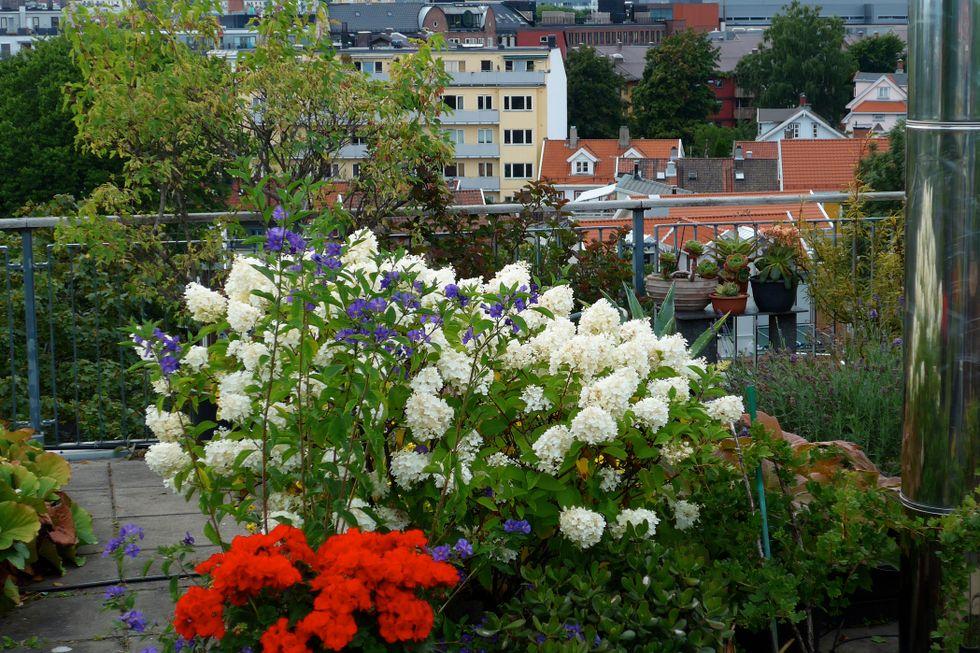 Paret fikk oppfylt ønsket om havutsikt og hage i et gammelt industrilokale i Oslo
