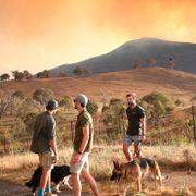 Unntakstilstand i Australias hovedstad på grunn av skogbrann