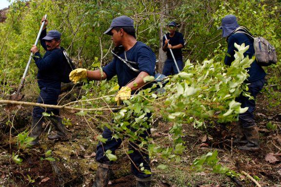 Geriljakrigen er over. Nå øker kokain-produksjonen.