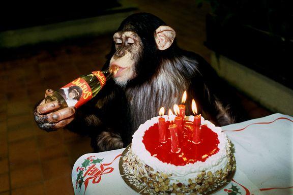 Biografien om Julius: Monkey business er best på barne-TV