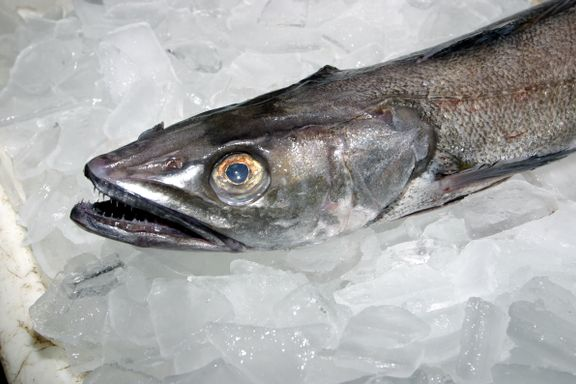 Denne fisken må du snart venne deg til å spise mer av