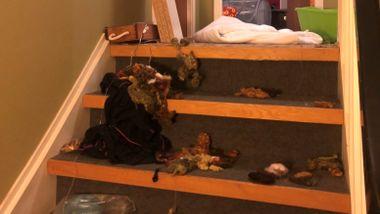 Lesbisk ektepar fikk leiligheten ramponert. Nå renner pengene inn.