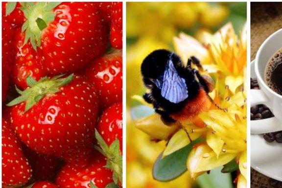 Dette skjer med maten din når insektene forsvinner