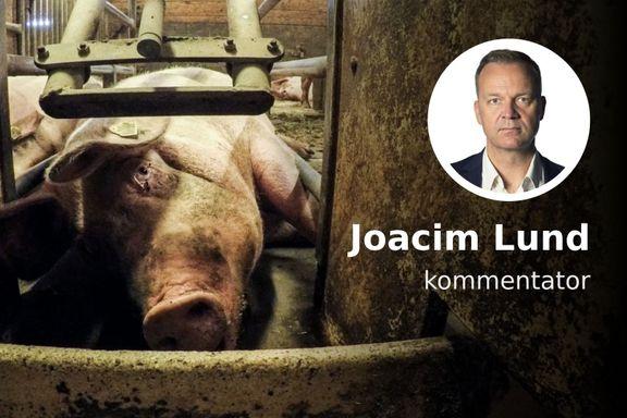 Det begynner å bli vanskelig å forsvare svineindustrien