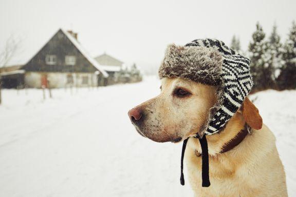 Veterinær: – Noen tror kanskje at hunder og katter ikke fryser i kulden
