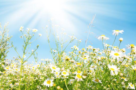 Derfor blir ikke planter solbrente