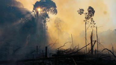 Dramatiske tall i ny rapport: 8 prosent av Amazonas er blitt borte siden 2000
