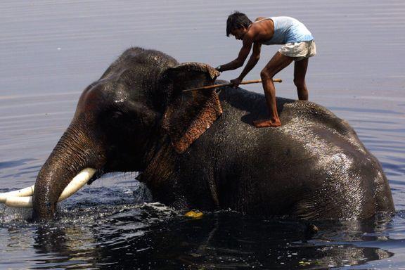 Sri Lanka forbyr «fyllekjøring» med elefant