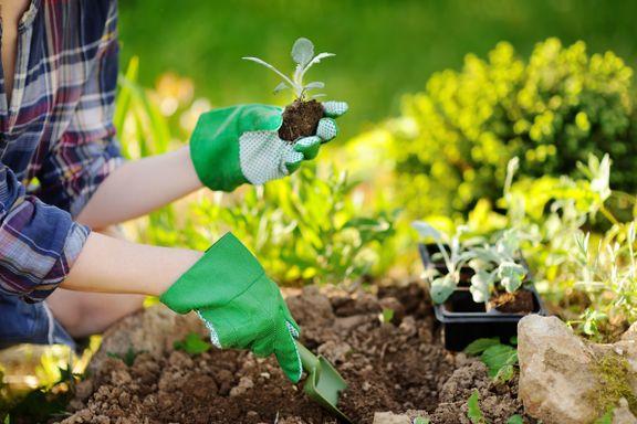 Hva lurer du på om hagearbeid? Send inn spørsmålene dine her
