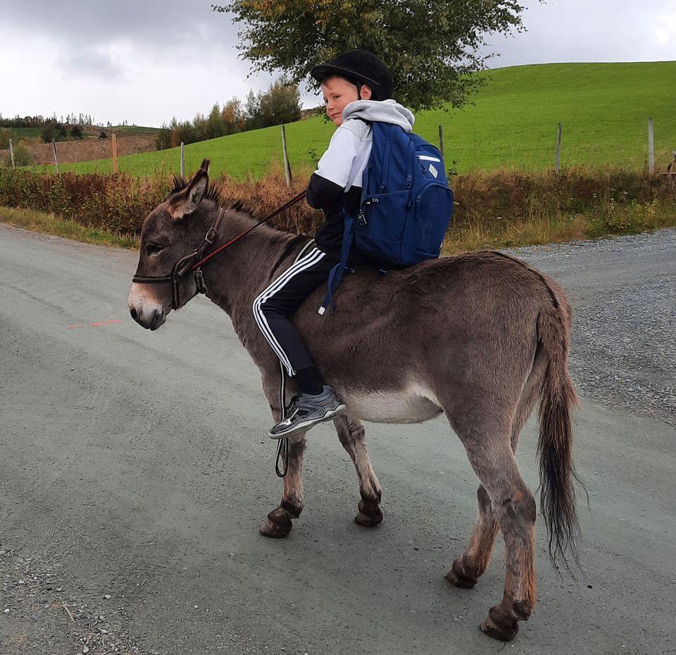 En gutt med hjelm og blå sekk rir på et brunt esel.