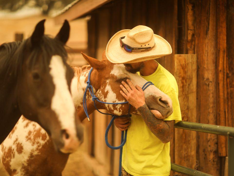 En mann med gul t-skjorte og cowboy-hatt klemmer hodet til en flekkete hest mens en mørkebrun hest med hvit tegning i ansiktet står i forgrunnen.