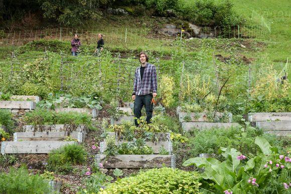 620d909c9 Økologisk hage: Denne hagen kan du forlate i tre år og den forblir ...