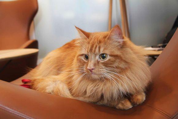 verdens eldste katt
