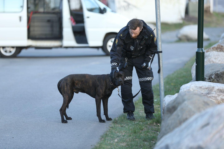 Hund angrep barn og politi i Larvik – eier pågrepet