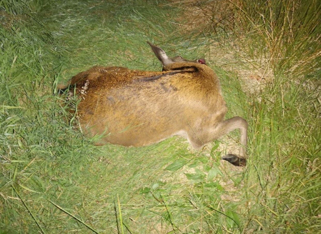 dødt dyr kryssord