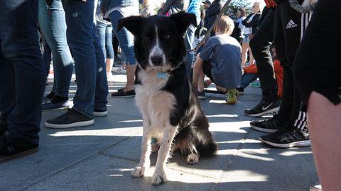 OPPKALT ETTER VASKEMIDDEL: Hundevalpen Zalo er bare syv måneder, men oppfører seg pent. – Hun er veldig flink til å være sammen med mennesker. Det er hun vant med, sier matmot Susanne.