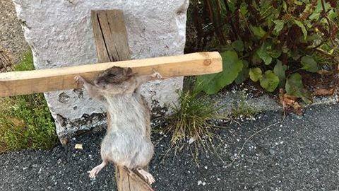 KORSFESTET: Flere har meldt om lite hyggelige syn på Laksevåg. Dette bildet ble tatt fredag ettermiddag.