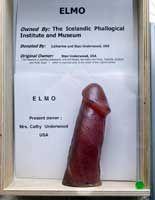 Stor rund penis