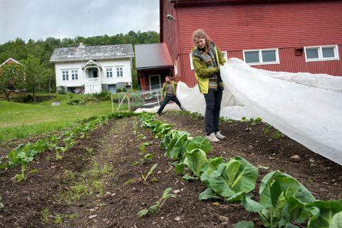 UNDER PLASTEN: Katinka Kilian og Grzegorz Kramar driver økologisk landbruk. Dukene beskytter grønnsakene mot skadedyr.