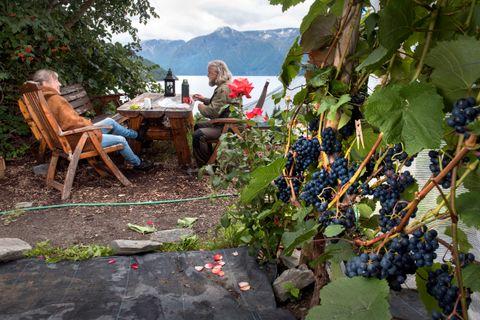 GODT LIV: – Betalingen for arbeidet med drueproduksjonen i indre Sogn har vært et godt liv og god helse, mener Bjørn Bergum og Halldis Nedrebø.
