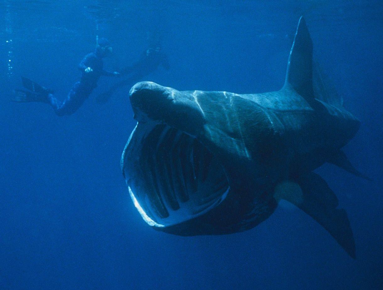 fikk gigantisk hai i garnet stavanger aftenblad